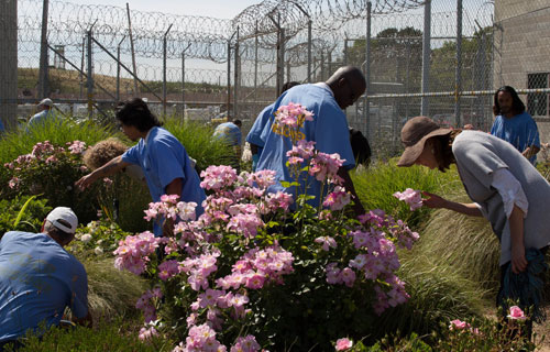 Prisoners in the flower garden